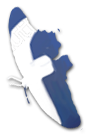 Butterfly Facebook Icon